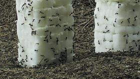 Heiße Luft im Garten Eden - Konzepte und Strategien nachhaltiger Entwicklung